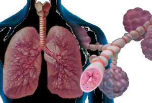 Asthma, Save and effective long term treatment
