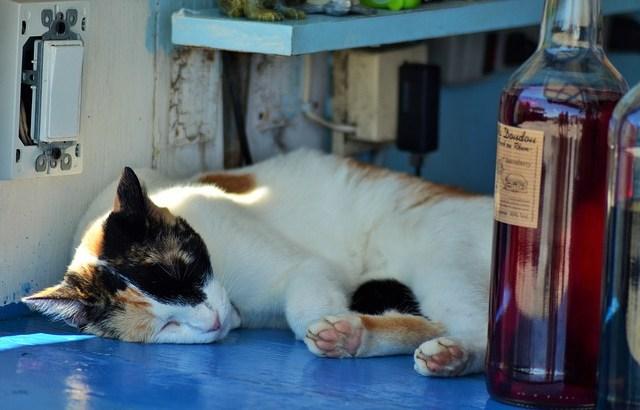 【猫ラベルのお酒】猫がボトルに描かれたお酒5選