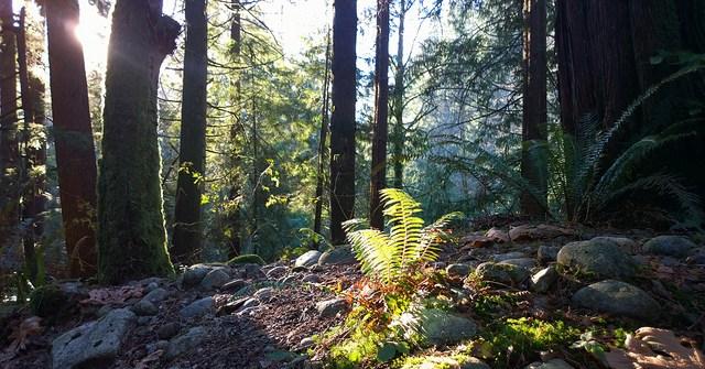 Bosques en Vancouver