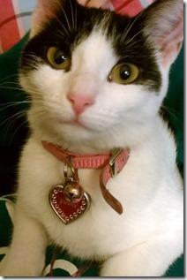 pinky-the-kitten