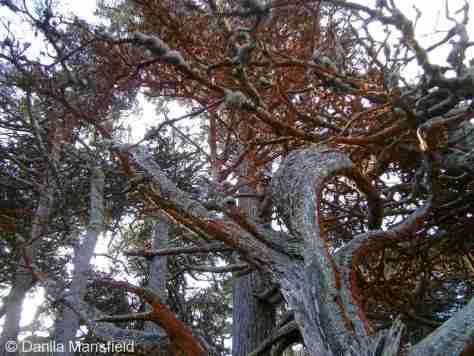 Monterey & Big Sur (3)
