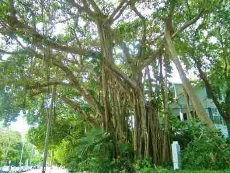 Key West (47)