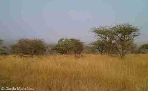 Zululand (16)