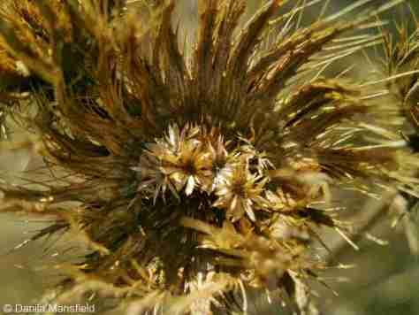 wildflowers (3)