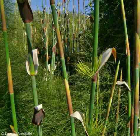 Kirstenbosch Gardens (22)