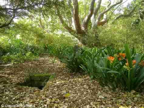 Kirstenbosch Gardens (29)