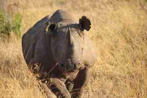 b rhino (1280x853)