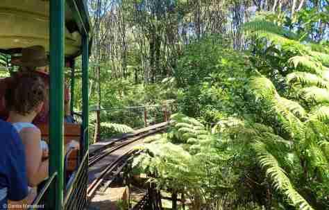 COROMANDEL - Driving Creek Railway