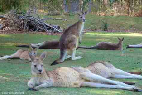 ROOS RELAX AT THE UNZOO