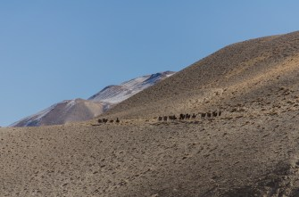 Afghanische Karawane