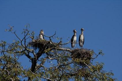 Frackvögel