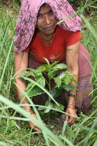 Farmerin mit einer Kaffeepflanze
