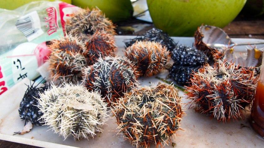Bohol Sea Urchin