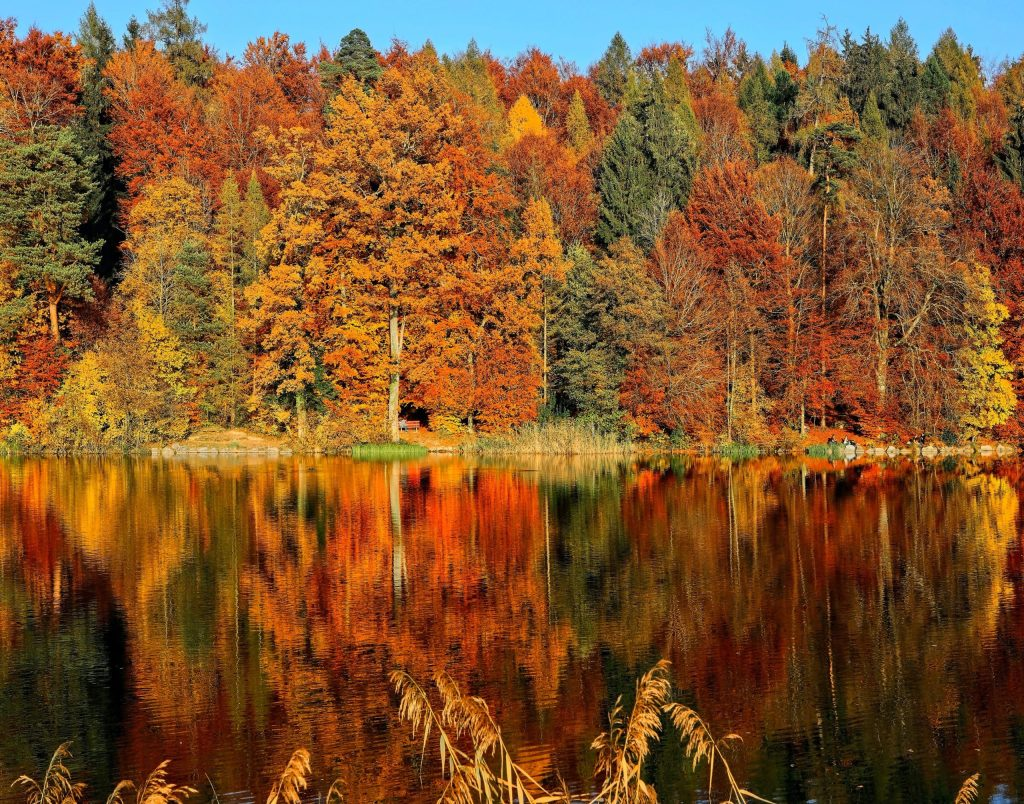 colorful autumn foliage reflected by lake