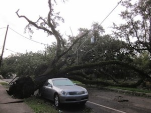 hurricane isaac tree on car new orleans