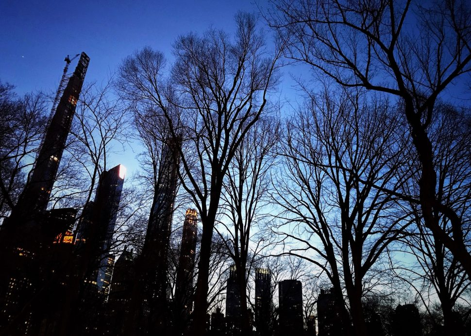 Central Park. Photo by Rick Stachura. February 21, 2020.