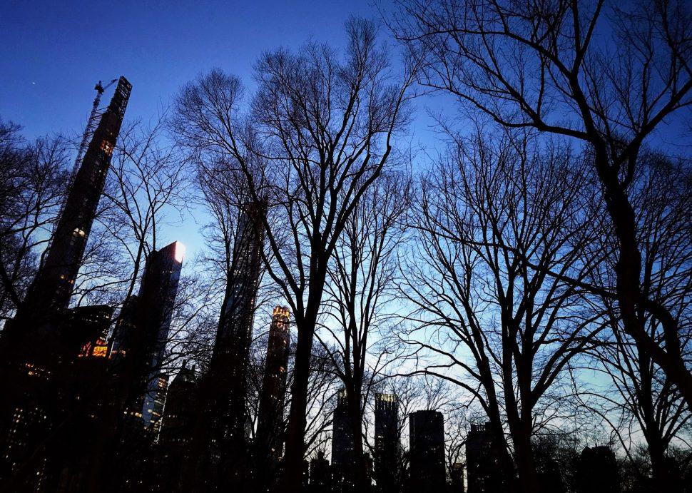 Central Park. Photo by Rick Stachura. February 21, 2020.