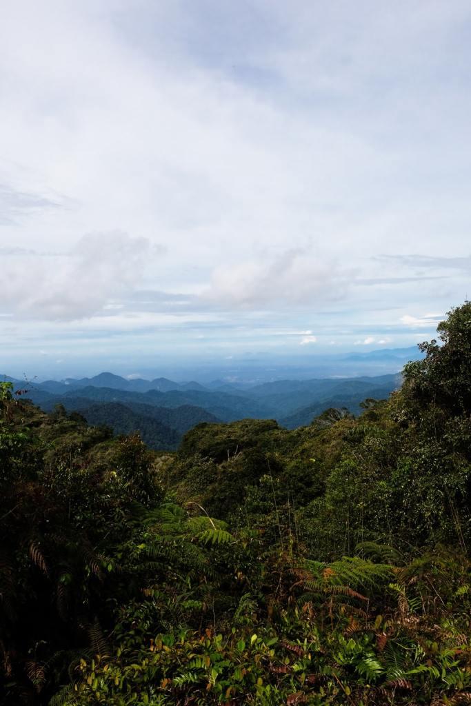cameron highlands view