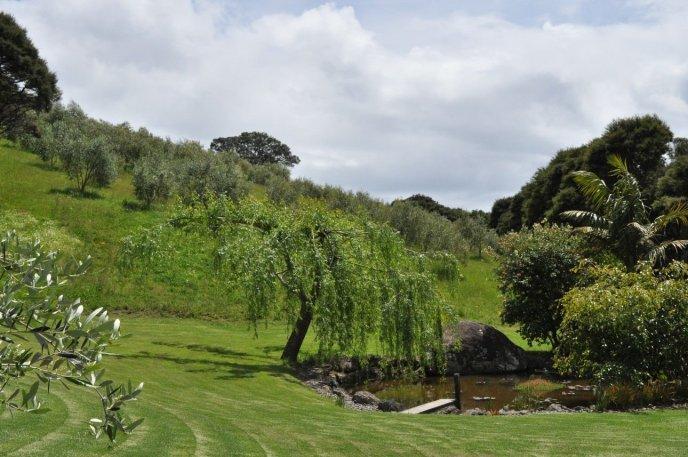 Rangihoua Estate olive groves