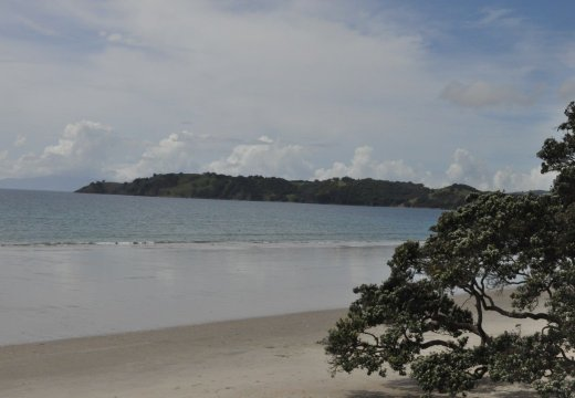 Beach at Waiheke Island