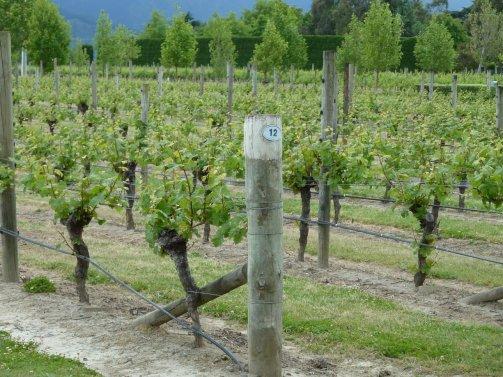 Brancott Estate Marlborough vineyards