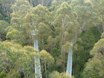 Cape Otway national park tree top walk
