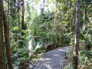 The Jungle Walk