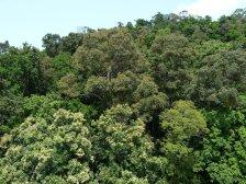Kuranda rain-forest