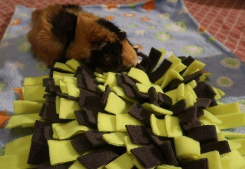 tapis de fouille pour rongeur lapin