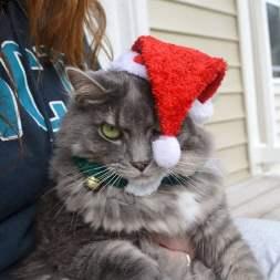 festive-pets14