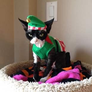 festive-pets2