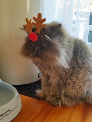 festive-pets6