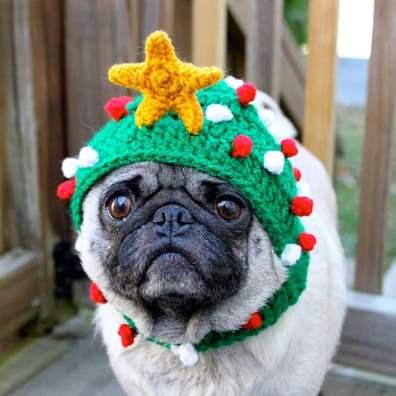festive-pets7