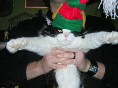 festive-pets18