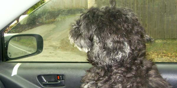 Bizu, our trusty copilot, leading us on our many adventures together.