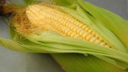 pelos-maíz