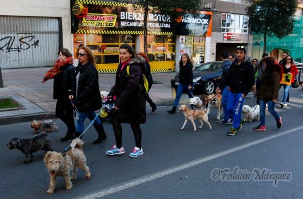 marcha perros peligrosos-3
