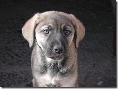 FOTO control reproductivo para mascotas de Pucón