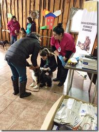 FOTO censo canino villa cordillera 2