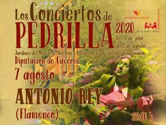 Antonio Rey esta noche en Pedrilla