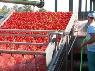 Industria del tomate