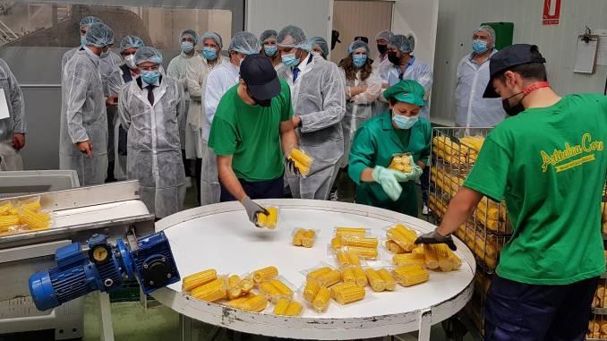 El presidente de la Diputación visita la fábrica de maíz en Valverde de Leganés que aspira a producir 12 millones de mazorcas al año