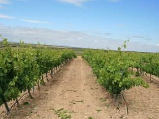 Agricultura-publica-la-orden-que-aprueba-los-estatutos-de-la-Denominacion-de-Origen-Ribera-del-Guadiana
