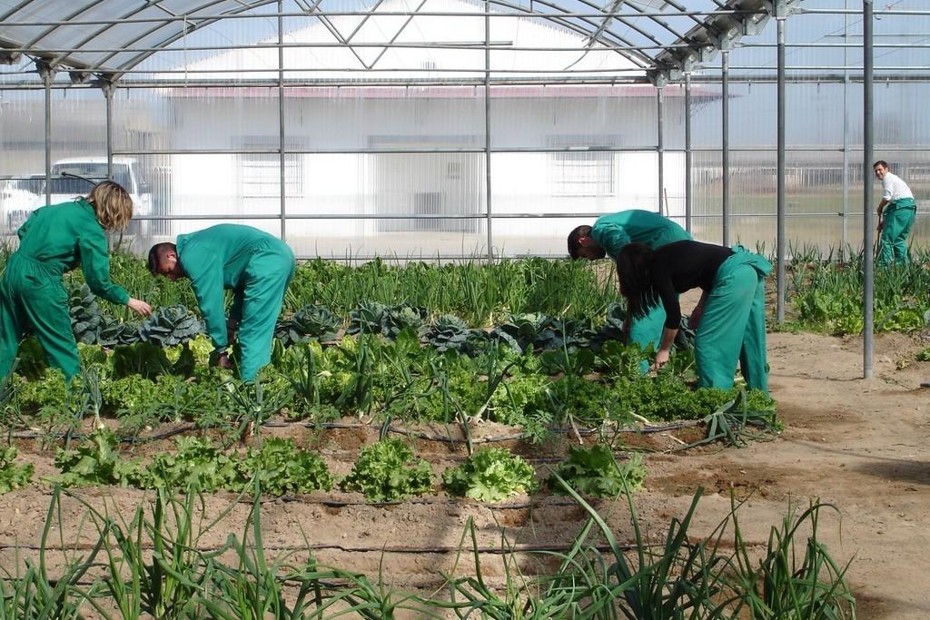 Publicada-en-el-DOE-la-convocatoria-para-la-creacion-de-agrupaciones-y-organizaciones-de-productores-agrarios-y-silvicolas-dotada-con-15-millones-1