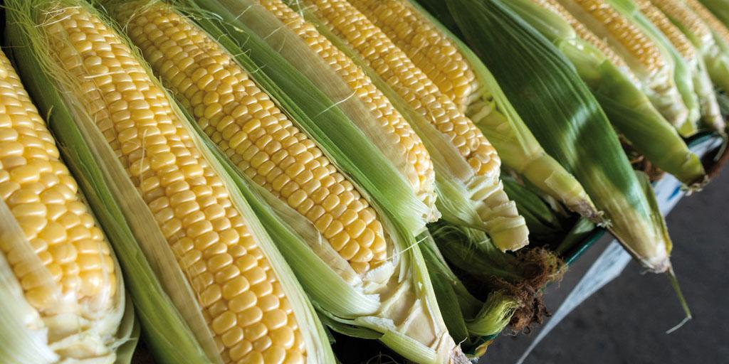 Laudato si' y la  agroecología: la cultura  del cuidado de la casa  común