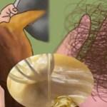 Estes dois Ingredientes fará seu cabelo crescer e nunca mais cair. Resultados Incríveis!