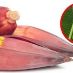 A flor da banana ajuda a curar problemas no útero. Descubra como!