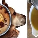 Mantenha pulgas e carrapatos longe de sua casa usando estes poderosos remédios caseiros
