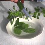 """""""A planta da juventude eterna"""" Esta planta nutre, cura e regenera suas células; Combate à Anemia, Diabetes, Gota, Artrite, Artrose, Reumatismo, Protege seu fígado e mais."""