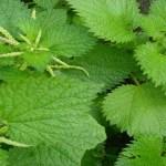 A planta da juventude; Limpa as manchas, regenera, nutre a pele e fornece colágeno.